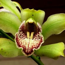 orchid-184312_640