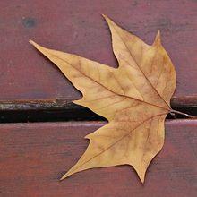 dry-leaf-546419_640