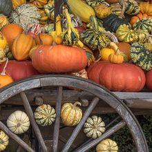 pumpkins-504103_640