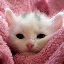 kitten-227011_640
