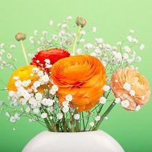 flowers-1190020_640