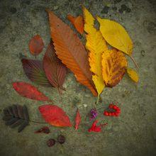 autumn-790470_640