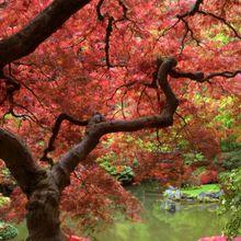 autumn-desktop-wallpaper-1920x1080-1009094