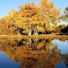 Fall_trees_by_lake