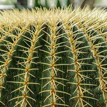 cactus-1591568_640