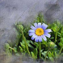 flower-729814_640