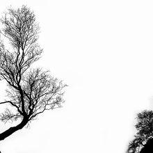 tree-316320_640