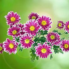 flower-314720_640