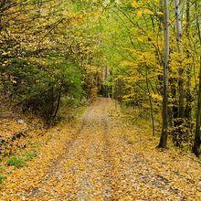 autumn-82911_640