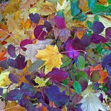 autumn-942044_640