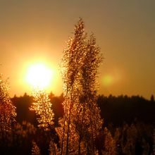 sun-361840_640
