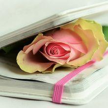 rose-764267_640