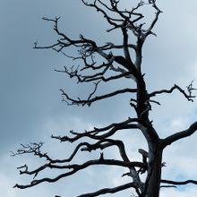 tree-167489_640
