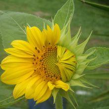 flowers-106579_640