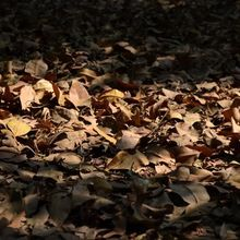 1586-old-leaves-on-ground