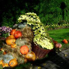 thanksgiving-515938_640