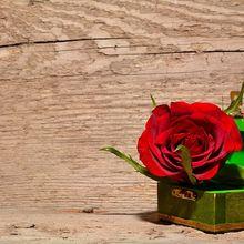 rose-557692_640