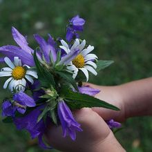 flowers-871555_640