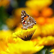 butterfly-169924_640