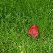 red-leaf-178027_640