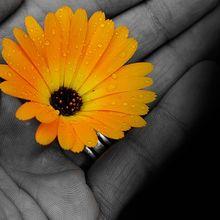 flowers-72177_640