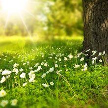 spring-276014_640
