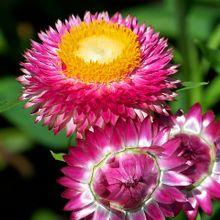 flower-18102_640