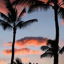 palm-tree-347020_640