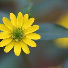 flower-247409_640