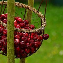 cherries-1503974_640