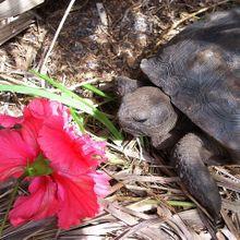 turtle-143337_640