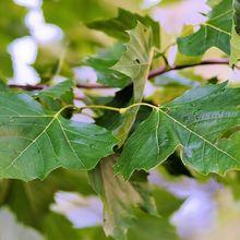 leaves-432325_640