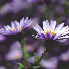 flowers-1005677_640